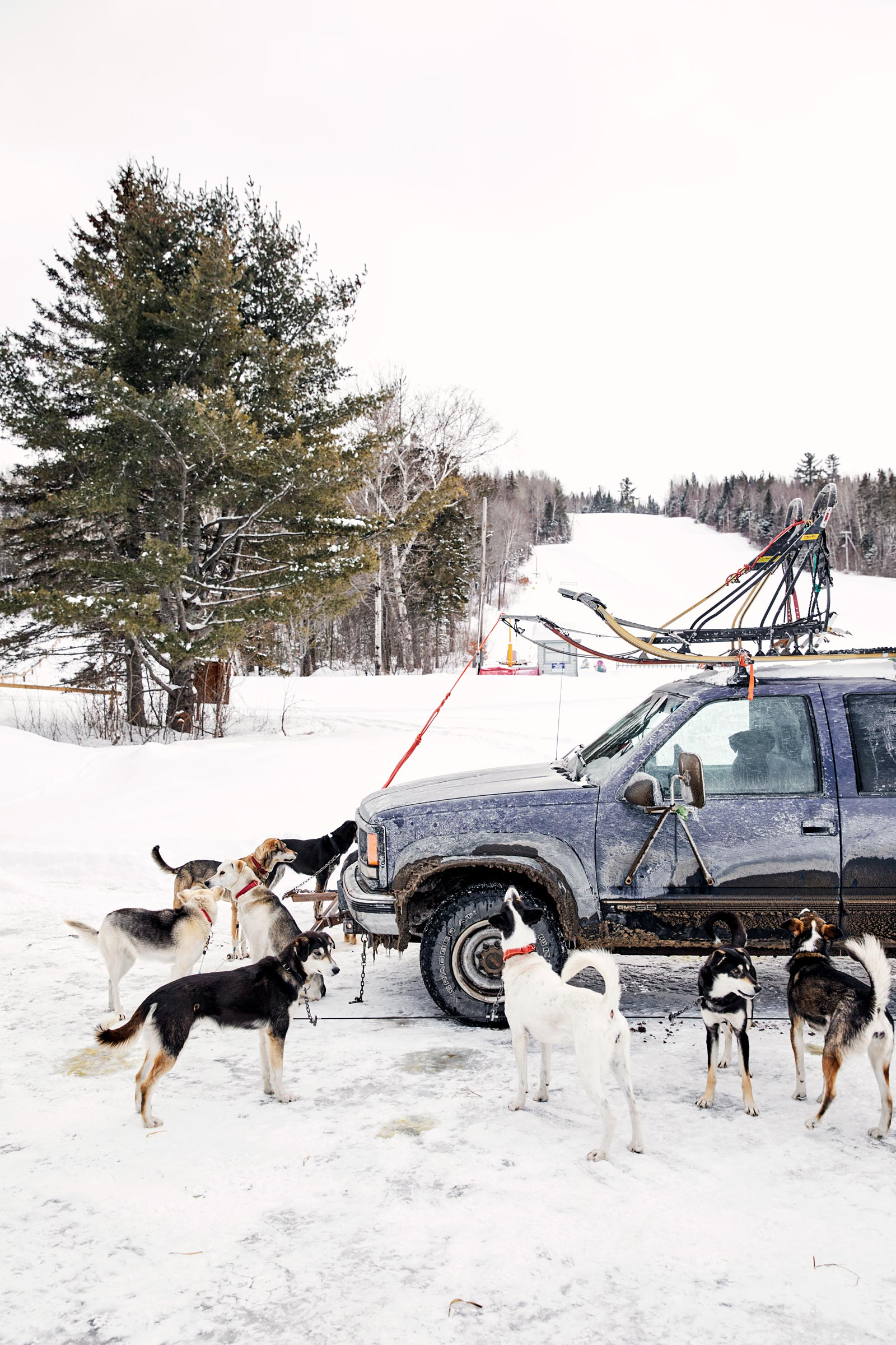 M_WilsonCan_AM-Dog-Sled00007