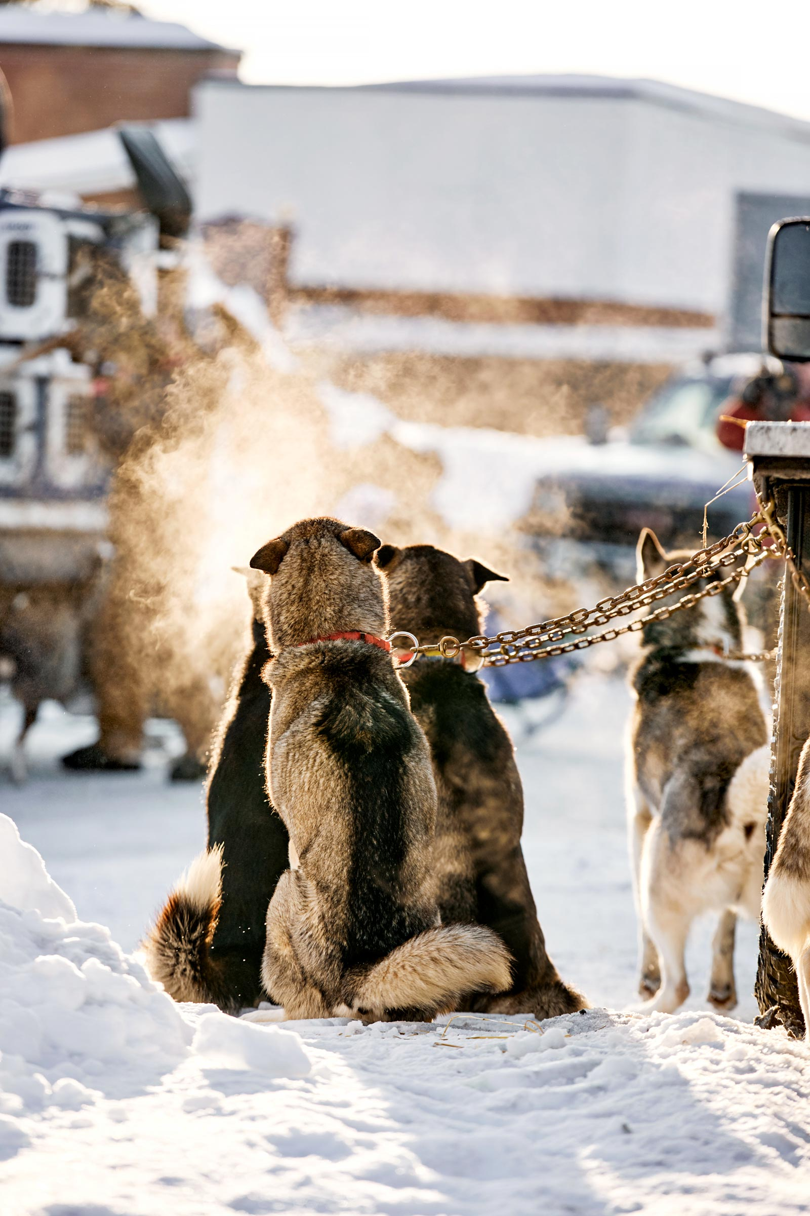 M_WilsonCan_AM-Dog-Sled00016