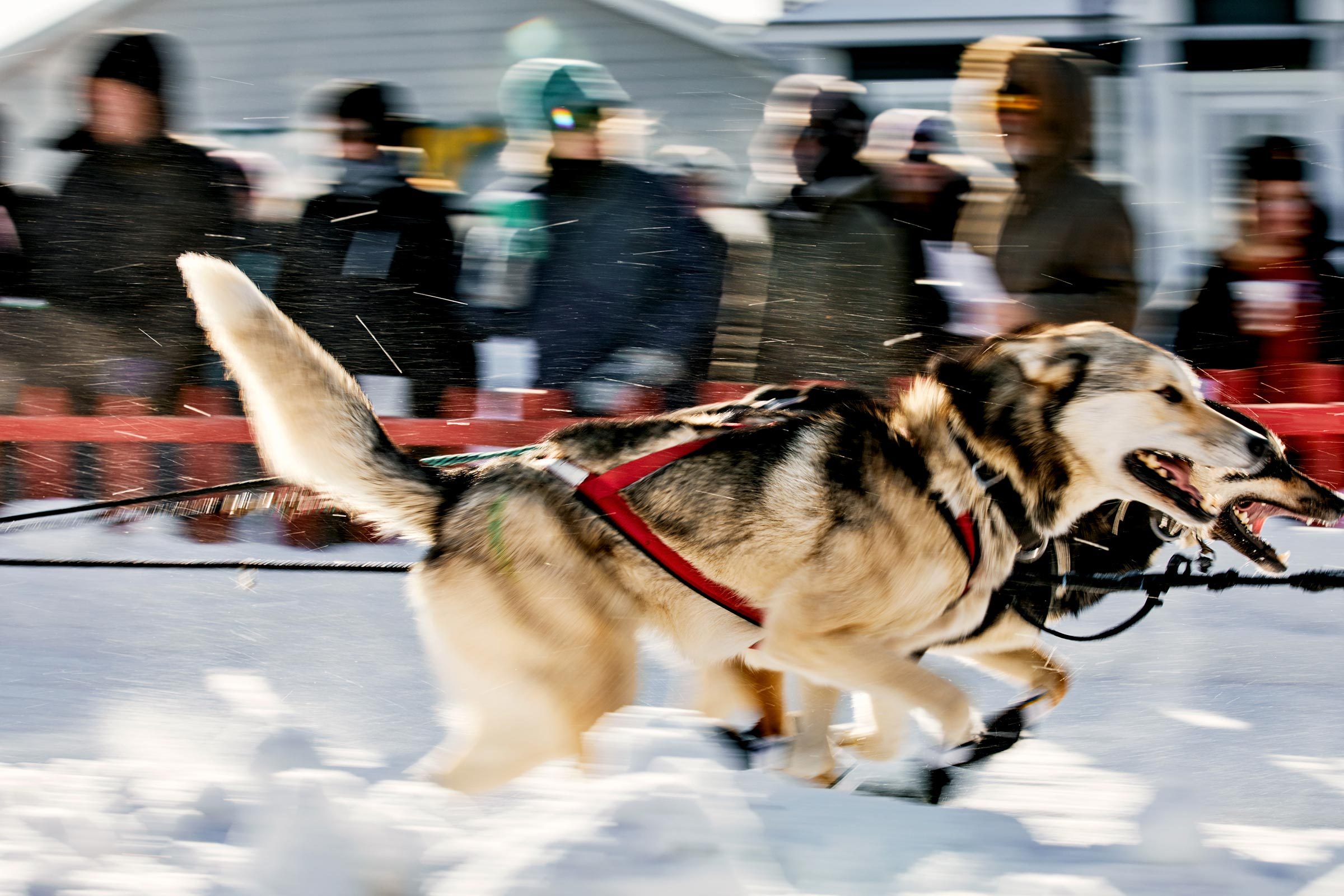 M_WilsonCan_AM-Dog-Sled00018