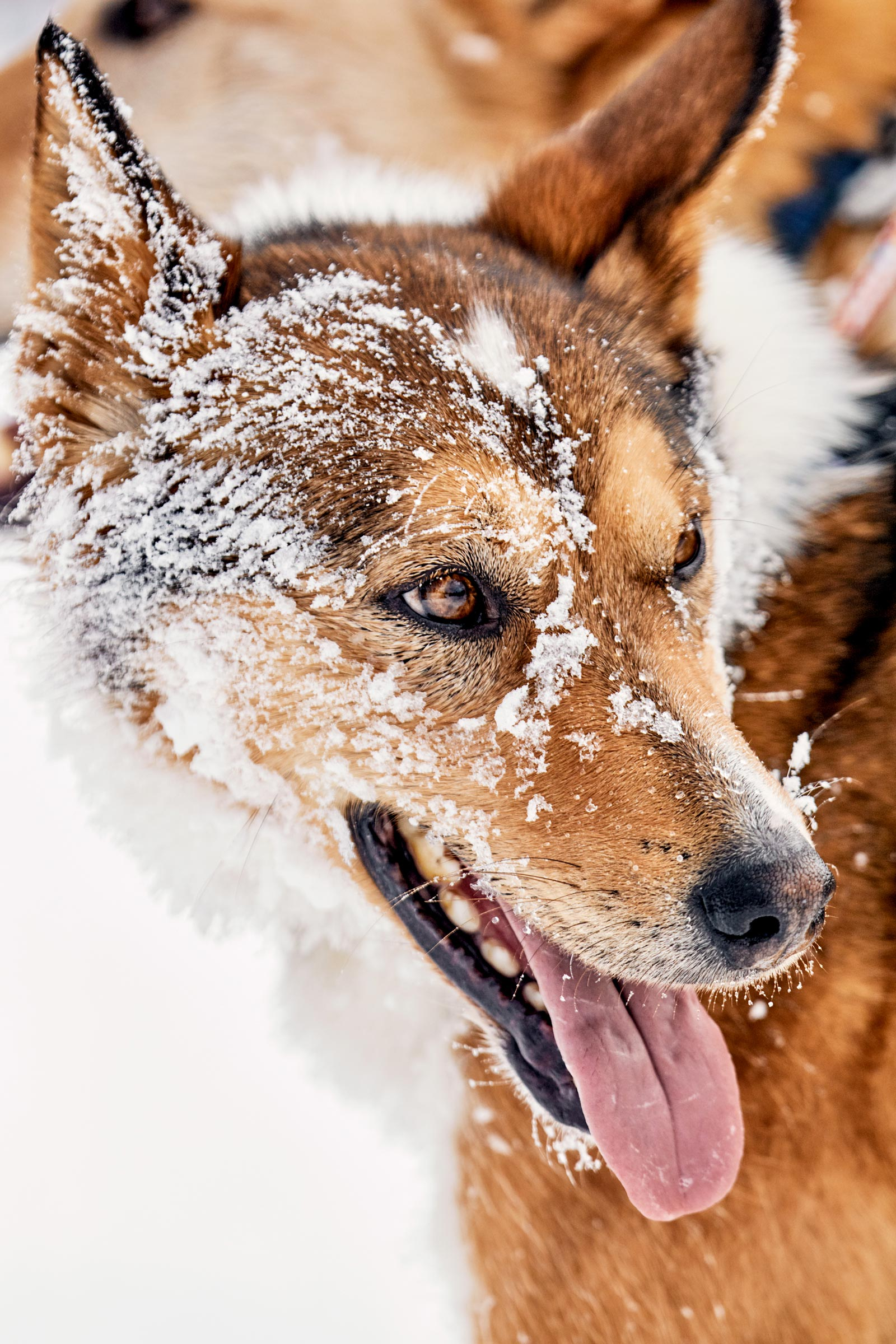 M_WilsonCan_AM-Dog-Sled00022