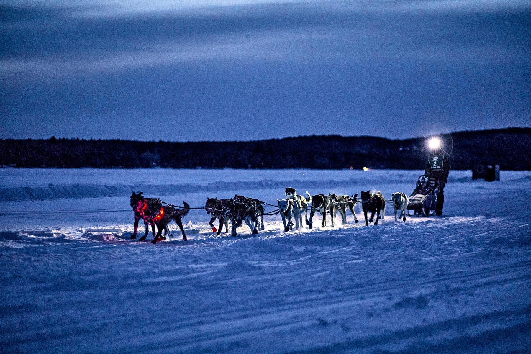 M_WilsonCan_AM-Dog-Sled00023