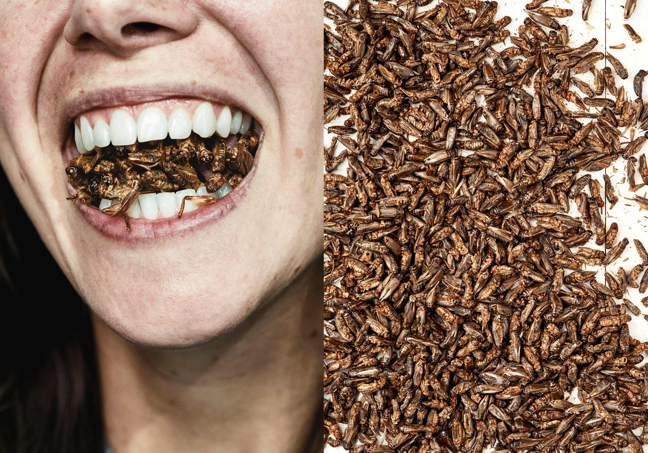 edible-insects